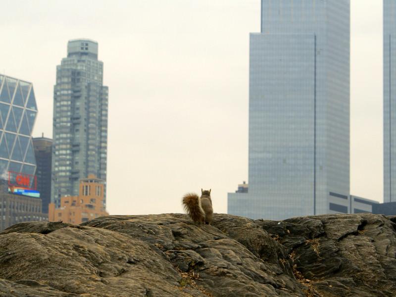Tierfantasy - Eichhörnchen betrachtet New York